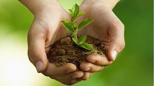 Importanta spiritului ecologic
