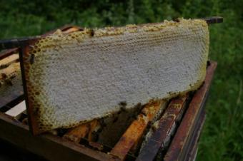 Afla de ce este mierea de salcam cel mai cunoscut tip de miere